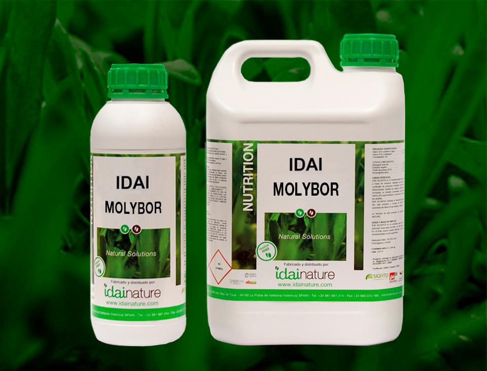 IDAI-MOLYBOR