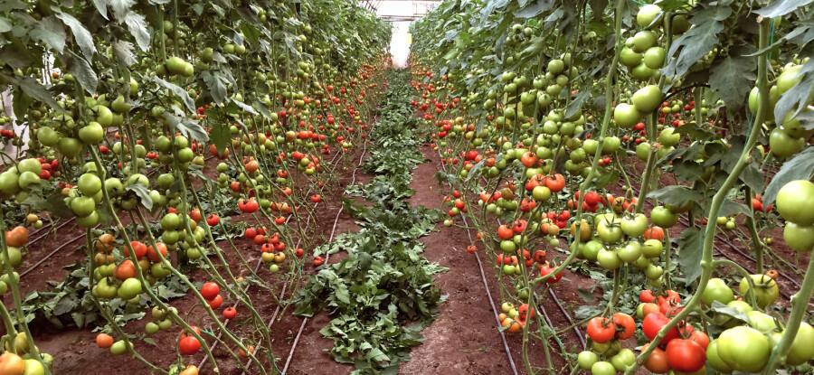 Abonos orgánicos y otros productos Idai en el mundo