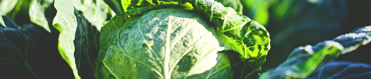 sano y sostenible fundación