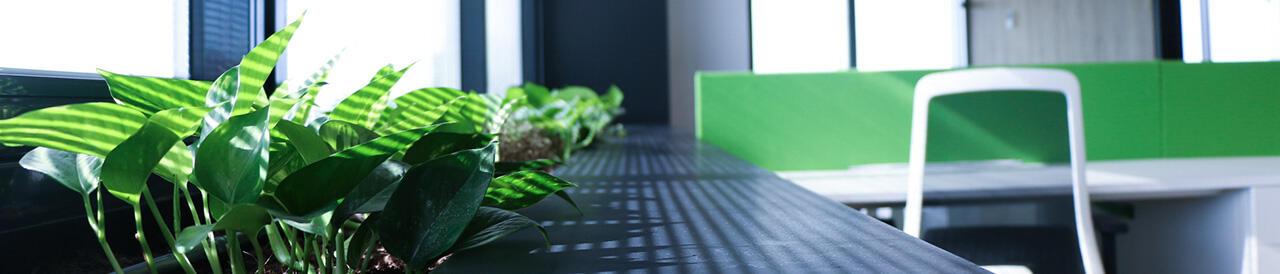 interior plantas