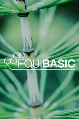 EquiBasic
