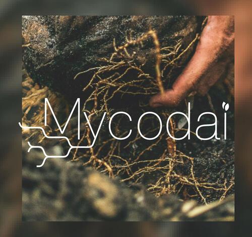 Mycodai: La simbiosis perfecta