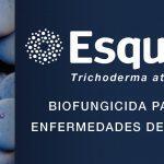 biofungicida contra las enfermedades de la madera de la vid