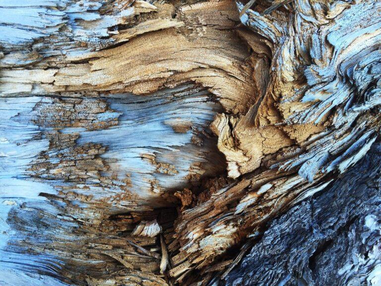 enfermedades de madera de la vid